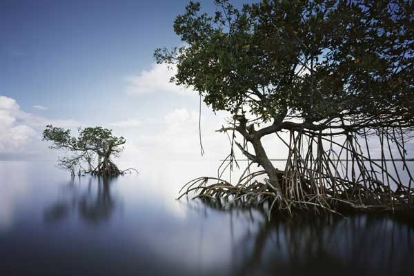 Photo of Gullivan Bay in the Everglades