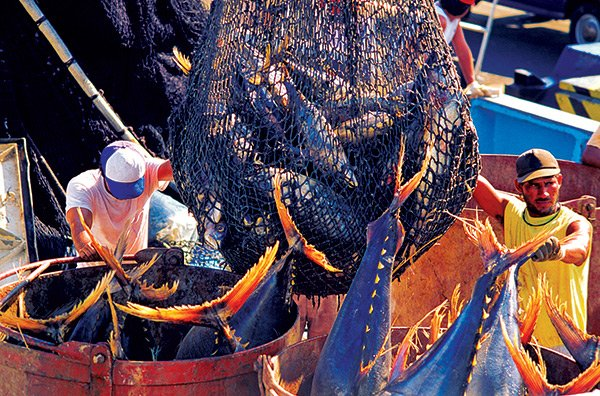 Using commercial fishing nets