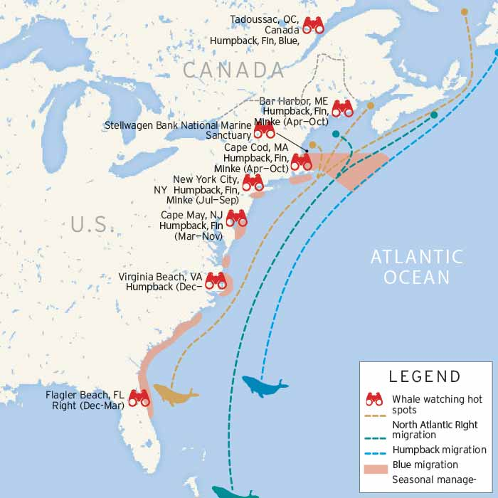East Coast whale watching map