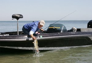 Angler Joe Balog catching a bass on Lake Erie, Fall 2008