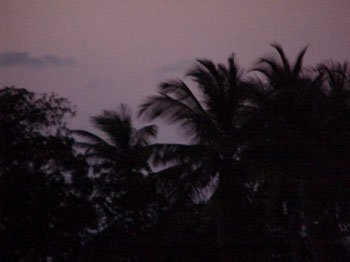 Photo of purple palms