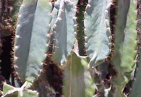 Photo closeup of catus