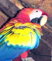 Photo of a colorful macaw