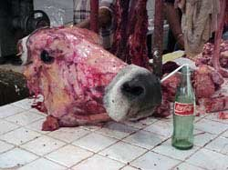 Photo of a cow head ready to be made into soup in a Valledolid market