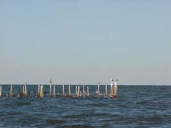 Photo of fish weirs on the Chesapeake