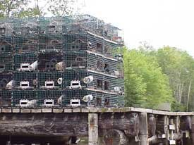 Photos of lobster traps