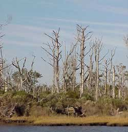 Photo of North Carolina on the ICW