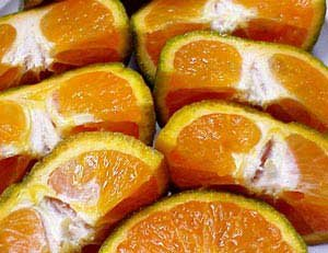 Photo of fresh oranges