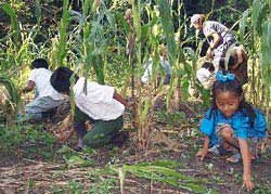 Photo of parents and children working in the fields