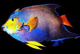 Photo of reef fish