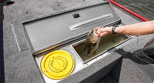 Keeping heat stressed bass alive fishing boatus for Fish livewell for boat