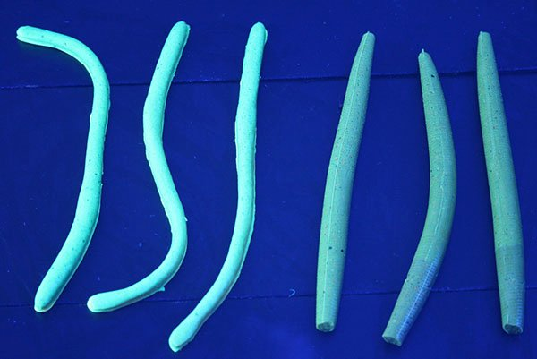 Photo of UV worms under blacklight