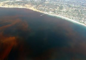 The results of a Harmful Algal Bloom creates a red hue in the water and can be damaging to humans in the food chain.