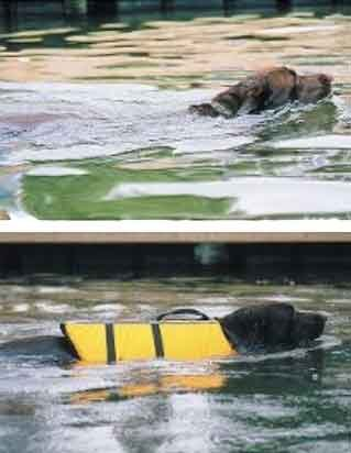 A comparison between 2 dogs. One wears a life jacket, the other doesn't have one. The doggie with the life jacket rides higher in the water.