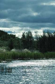Image of a marsh land with an overcast sky.