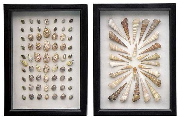 Tahiti Shell Collections
