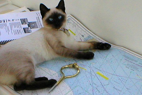 Photo of Ship's kitty Daisy