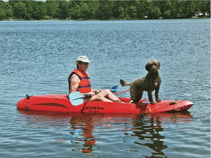 Photo of a portuguese water dog standing watch on a kayak