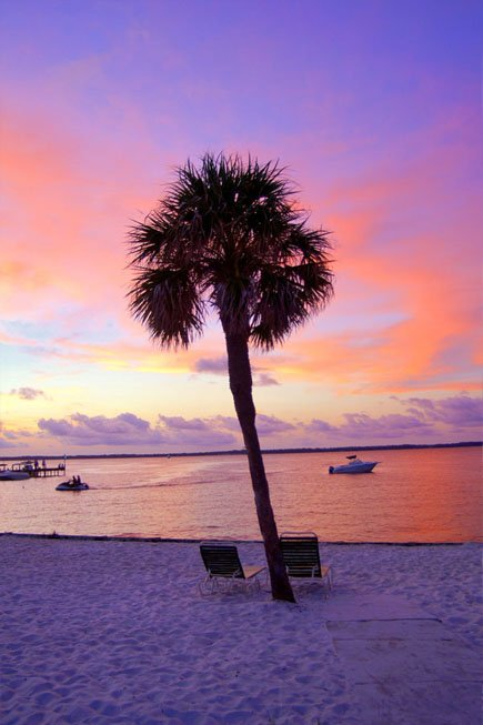 Photo of sunset with a palm tree on a Florida beach
