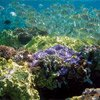 Thumbnail photo of a shallow-water coral reef