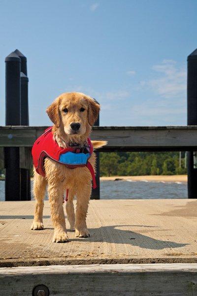 Life Jackets For Dogs Boatus Magazine