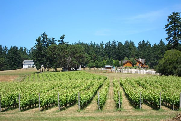 Photo of vineyard