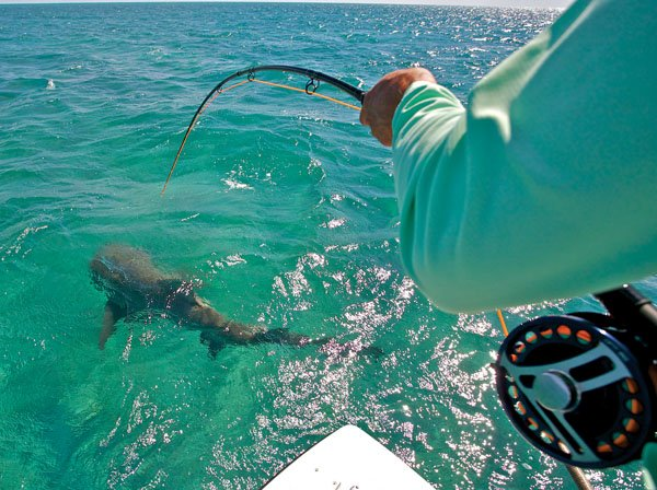 Photo of shark fishing with a fly rod