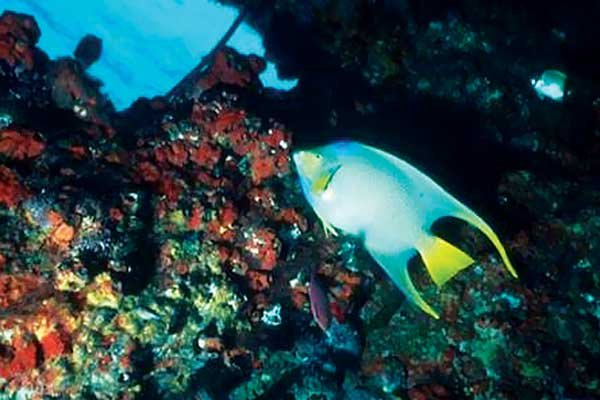 Photo of a Gulf Coast reef