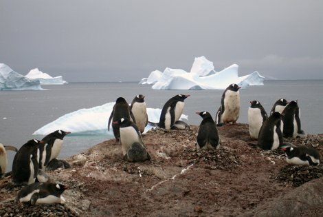 Photo of penguins on the Antarctica shoreline