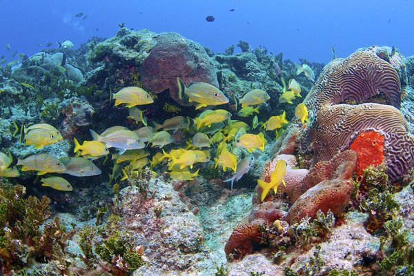 Photo of tropical fish and coral