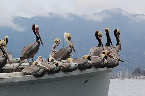 Photo of pelicans on boat