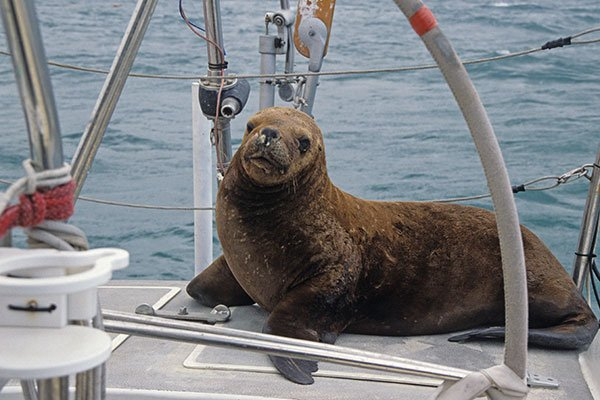 Photo of sea lion on boat