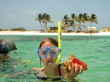 Photo of finding conchs on Anegada