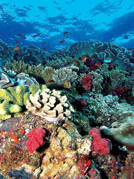 endangered coral reefs essay What is the point of saving endangered species  whether it's tigers, pandas, california condors or coral reefs, much of the world's wildlife is under threat.