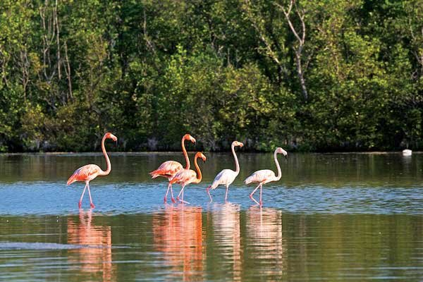 Photo of flamingos in Everglades National Park