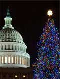 Photo of the National Christmas tree
