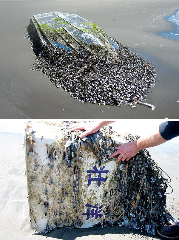 Photo of tsunami debris