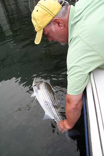 Photo of Scott Manning practices fish CPR: catch, photograph, and release
