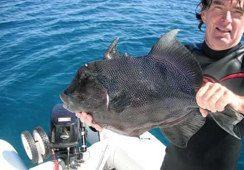 Photo of Tom holding a trigger fish