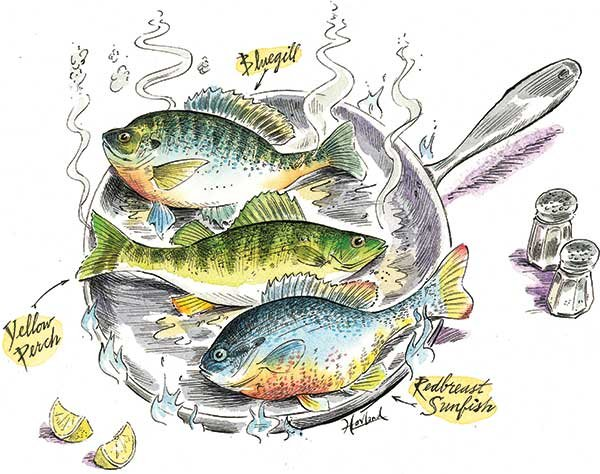 Illustration of cooking panfish