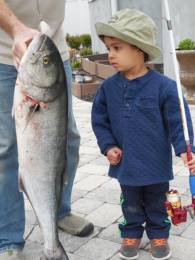 First look at a 35-inch bluefish