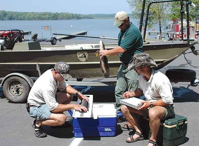 Staff survey Northern Snakehead Fish caught in West Virginia