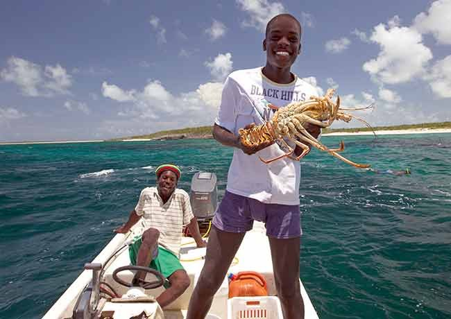 Catching spiny lobster