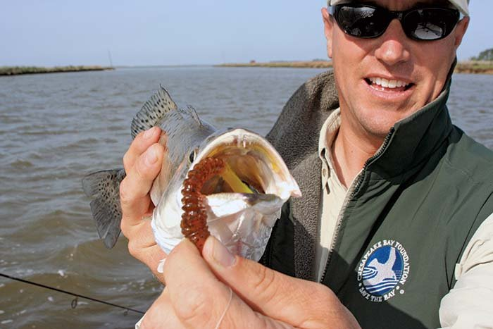 Speckled sea trout catch