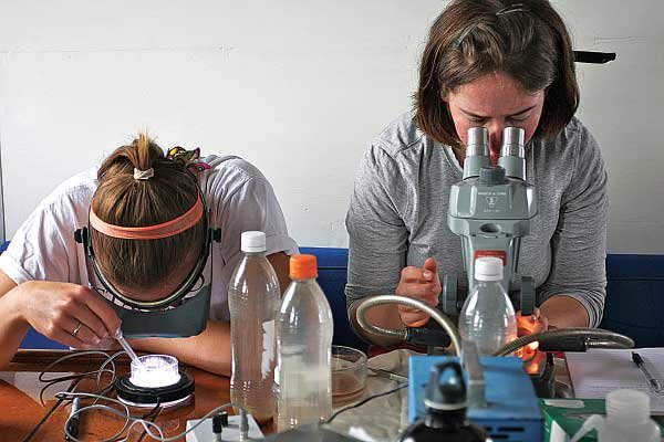Photo of examining squid embryos