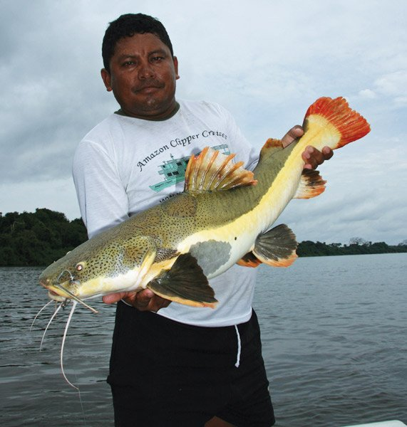 Photo of an angler holding an Amazon catfish