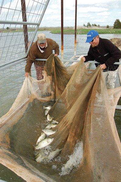 Photo of Mike Frazier and Elite Series angler Clark Reehm pulling up the nets
