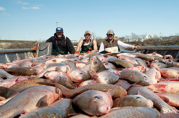 Photo of Tim Adams making a haul with 10,000 buffalo fish