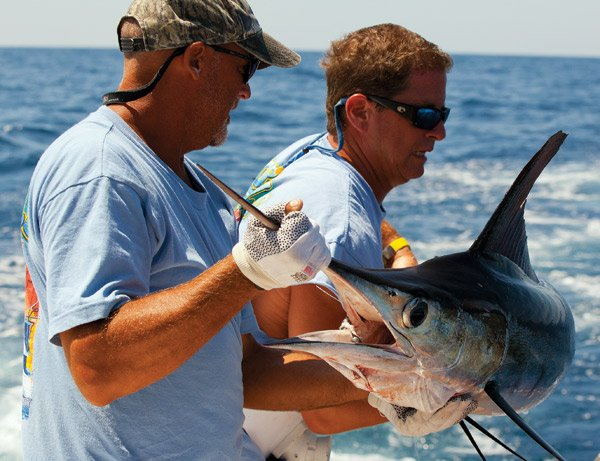 Photo of two anglers hauling in a white marlin