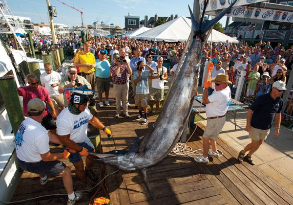 Photo of dockside weigh-in at White Marlin Open